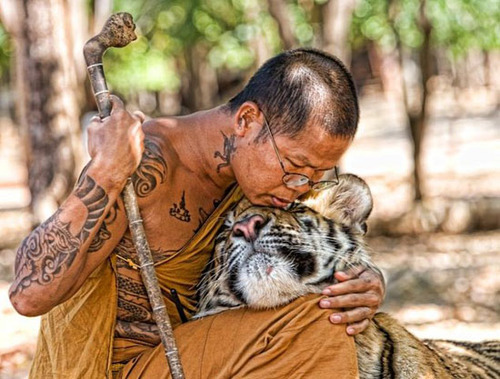 Compassion_Monk_Tiger
